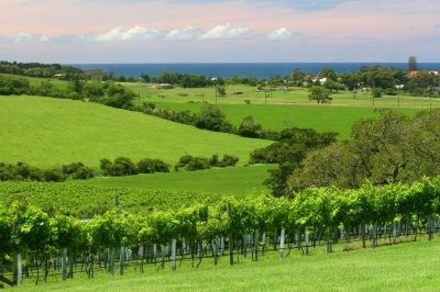 IMG_0006-FROM-CROOKED-RIVER-WINERY-from-kiama-tourism-jpeg