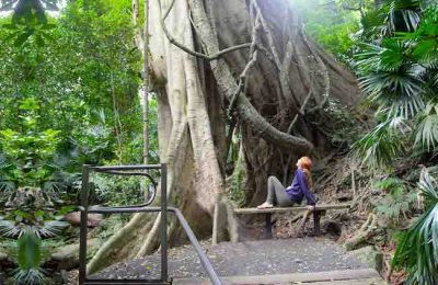 Minnamurra Rainforest Centre for blog